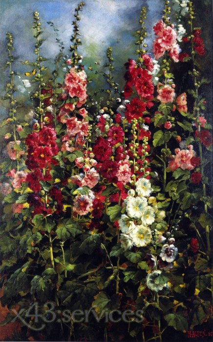 Mathias J Alten - Stockrosen - Hollyhocks
